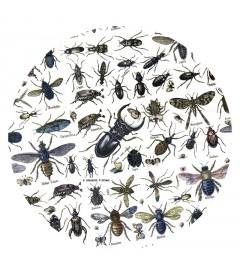 Les insectes se meurent, entendez-vous notre planète pleurer?